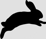 Domácí králíček Ňufíček