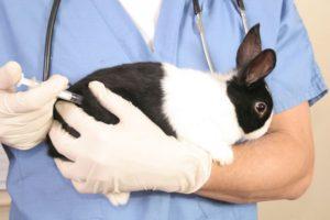 očkování králíčka