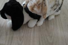 Králíček Ňufíček - s mým plyšovým králíčkem