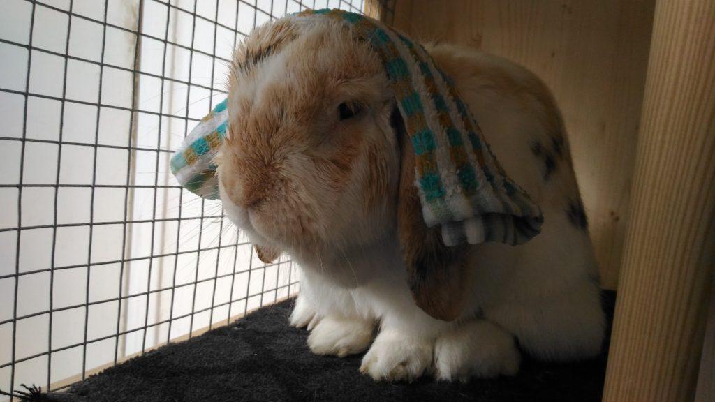 Ochlazení Ňufíčka v létě mokrým ručníkem