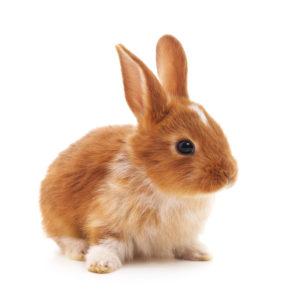 Zakrslý králíček - Ňufíček