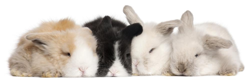 Králičí spánek - Ňufíček