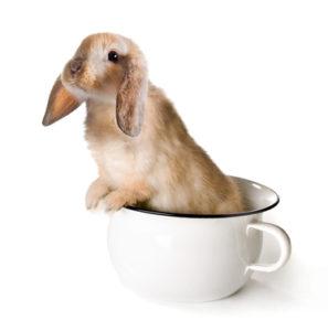 Průjem u králíčků - Ňufíček