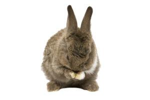 Rýma u králíčků - Ňufíček