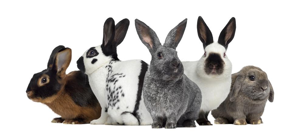 Soužití králíčků - Ňufíček