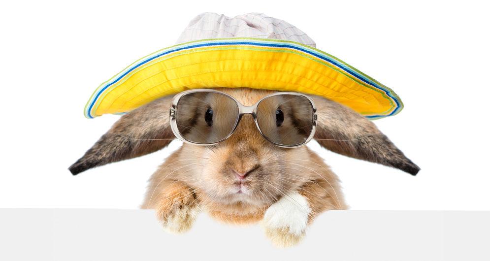 Cestování králíčků - Ňufíček