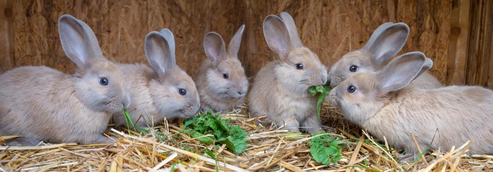 Frekvence krmení králíčka - Ňufíček