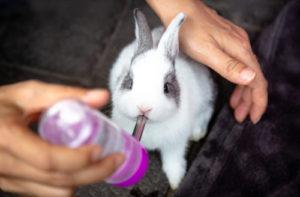 Pitný režim králíčka - Ňufíček